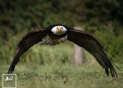 Arend Spaans Fotografie roofvogel workshop